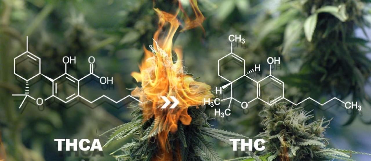 https://drlv.org//images/easyblog_articles/384/a1sx2_neu_Der-Unterschied-zwischen-THC-und-THCA.jpg